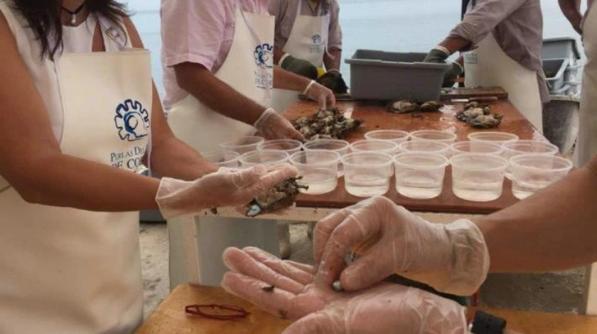 f520901bca9e Embellecen perlas del Mar de Cortés