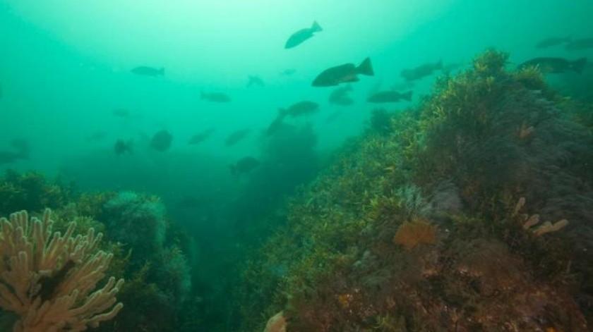 Resultado de imagen para Compran seguro para proteger arrecifes y playas de Quintana Roo