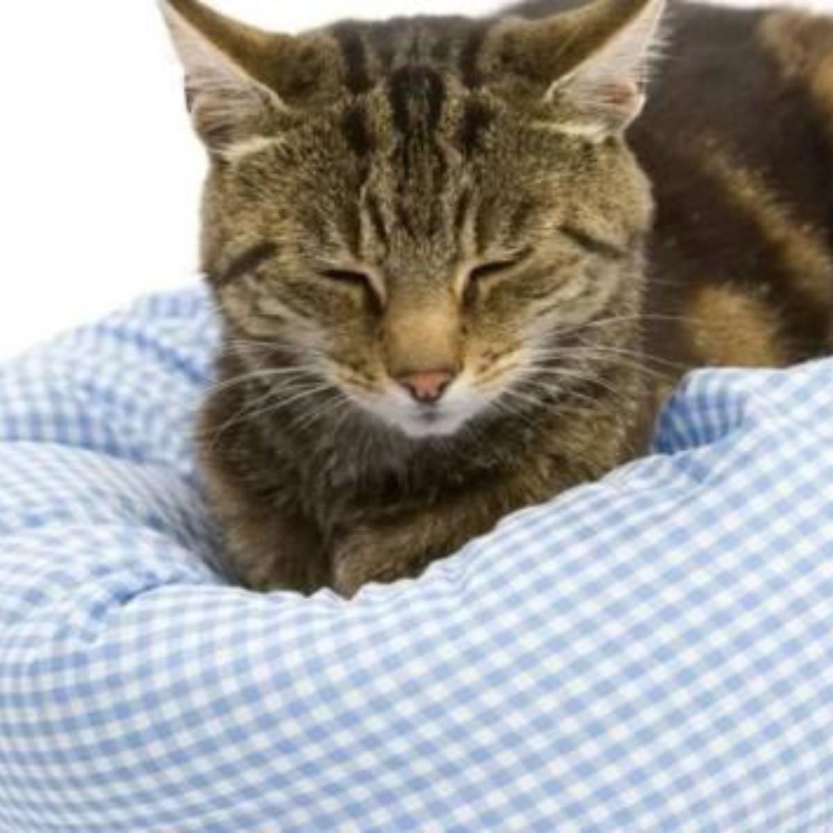 dieta casera renal para gatos