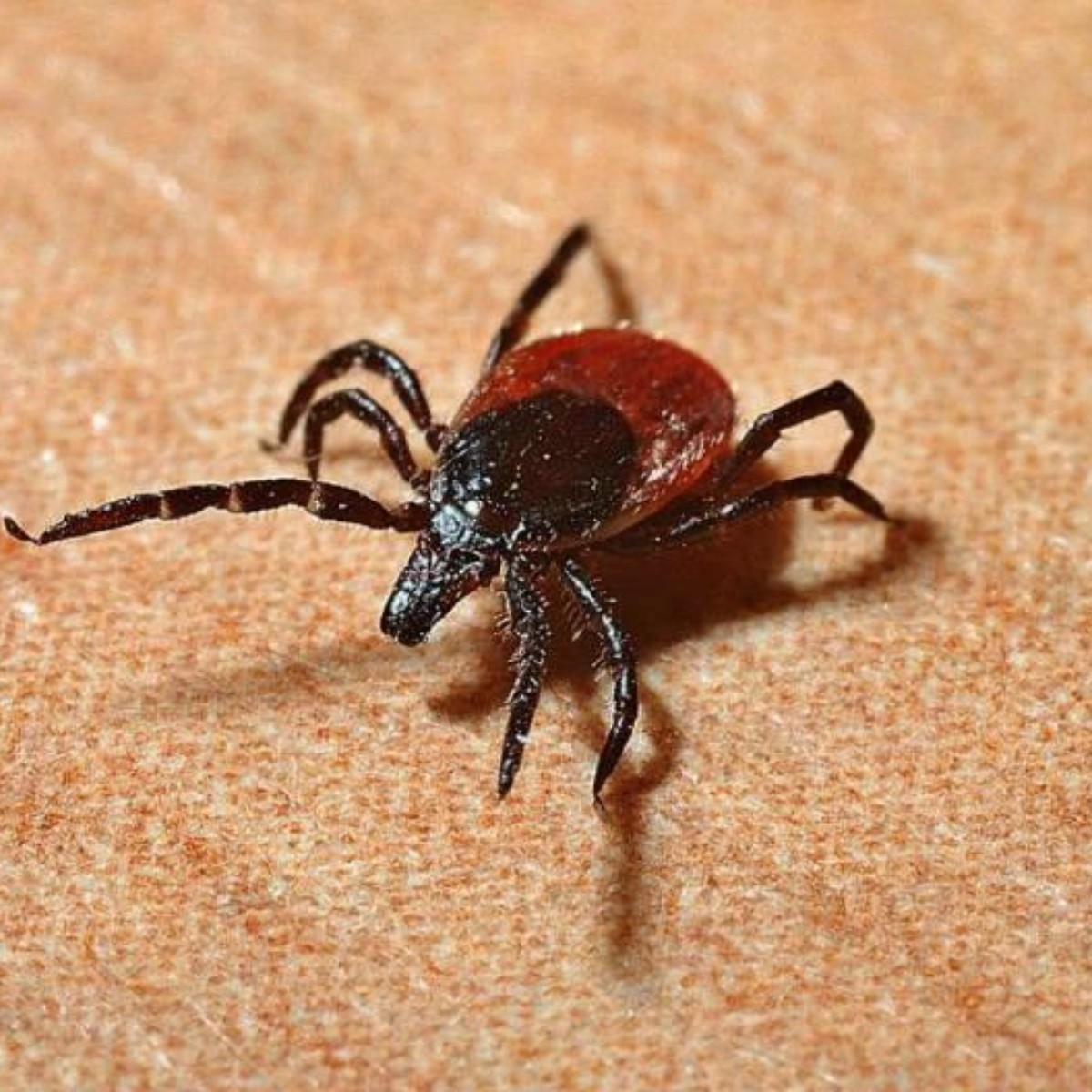 Mareos constantes enfermedad de Lyme