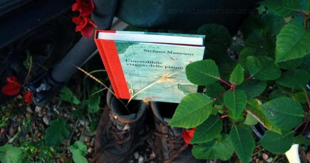 """""""El increíble viaje de las plantas""""   ELIMPARCIAL.COM"""
