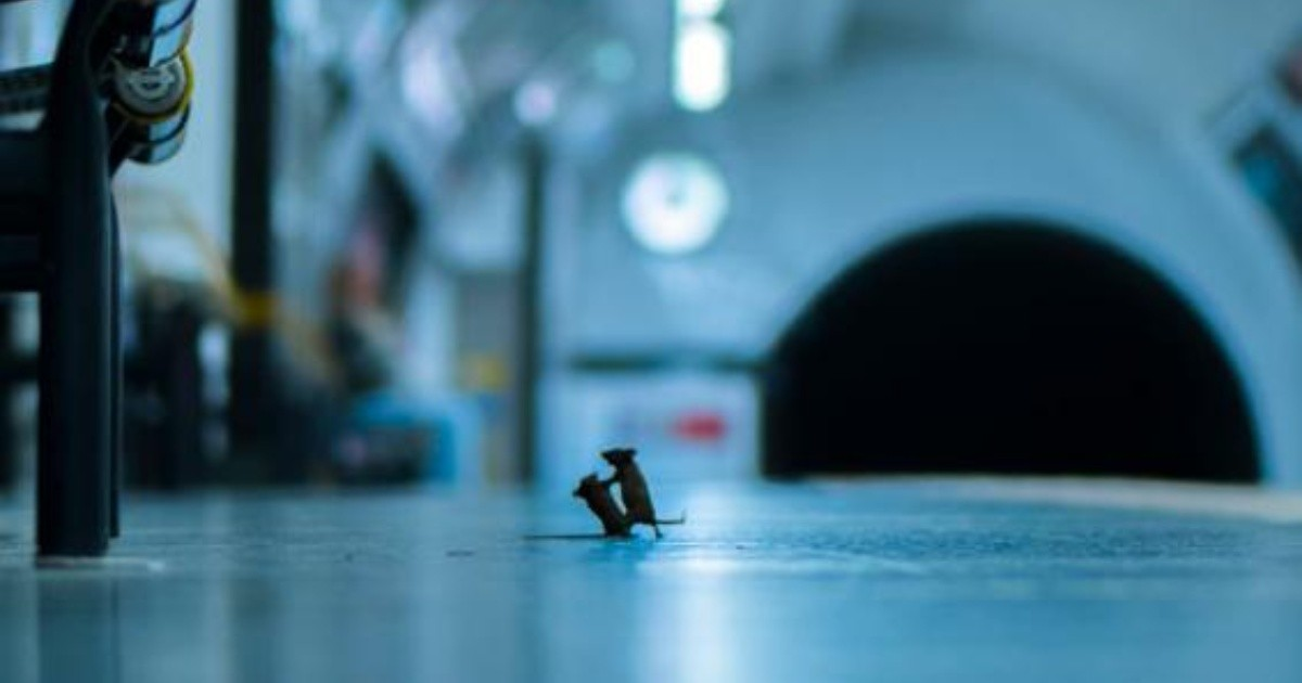 Resultado de imagen para ratones peleando por unas migajas