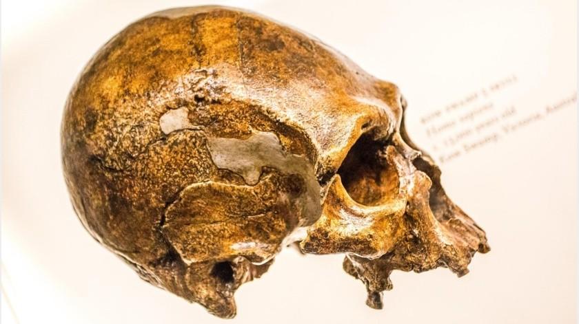 """Los primeros análisis sugieren que tiene más de 70.000 años de antigüedad y, aunque el sexo está por determinar, los dientes indican que se trata de un """"adulto de mediana a avanzada edad"""".(Ilustrativa-Pixabay)"""