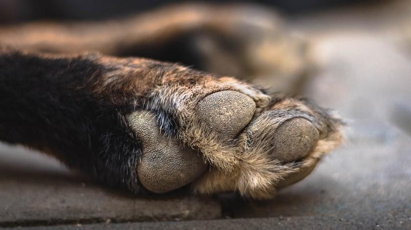 Según el informe de la policía, el veterinario realizó pruebas que revelaron metanfetamina en los cuerpos de los caninos.(Pixabay)