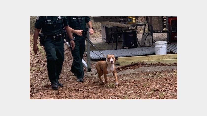 Tras el reporte, oficiales iniciaron a buscar al menor, quien fue localizado junto a Buddy.(Suwannee County Sheriff's Office)