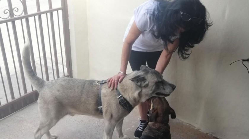 """Su amigo perruno """"Flaco"""" le ayuda en su recuperación.(Gustavo Suárez)"""