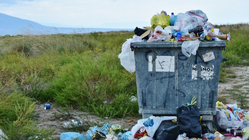La criatura puede comer plástico, incluso el polietileno, un plástico común y no biodegradable que actualmente afecta a los mares.(Pixabay)