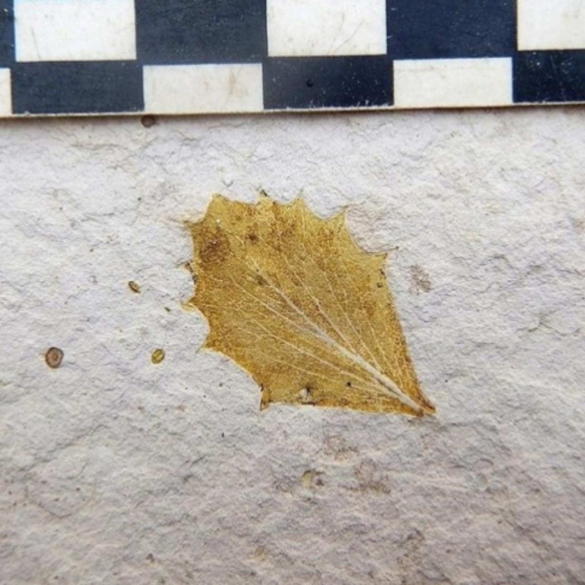 Un árbol fósil crea el paisaje de los Andes de hace 10 millones de años | EL IMPARCIAL | Noticias de México y el mundo