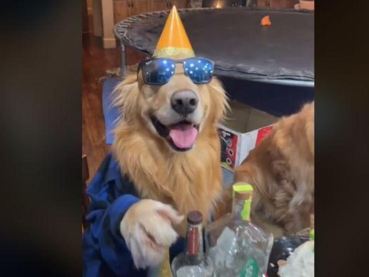 VIRAL: Hombre celebra los 7 años de su perrito con una fiesta   Noticias de México   EL IMPARCIAL