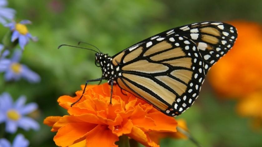 Mariposas de otoño
